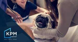 KPM Group - Property Management Blog - Ireland - Landlord Guide - Should You Allow Pets in a rented property?